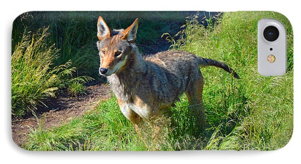 Red Wolf Pup IPhone Case