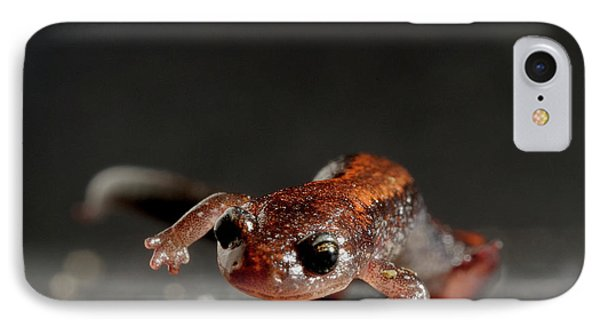 Salamanders iPhone 7 Case - Redback Salamander Plethodon Cinereus by Aaron Ansarov
