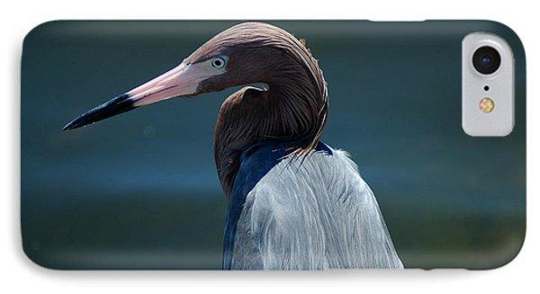 Reddish Egret 3 IPhone Case