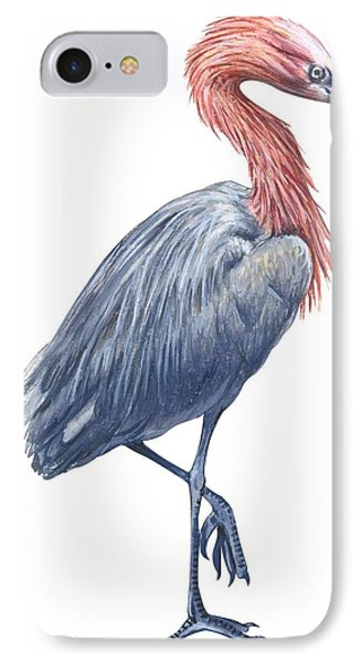 Reddish Egret IPhone Case by Anonymous