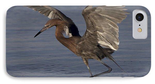 Reddish Egret Fishing IPhone Case by Meg Rousher