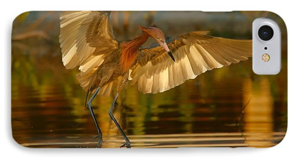 Reddish Egret In Golden Sunlight IPhone Case