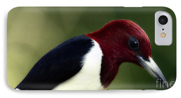 Redheaded Woodpecker At Dusk Phone Case by Cris Hayes