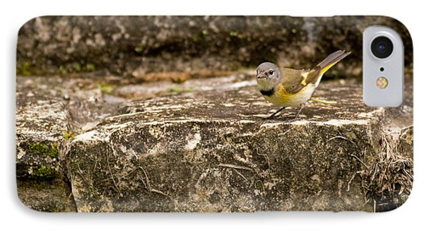 Redstart In Ruins IPhone Case by Brian Magnier