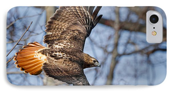 Redtail Hawk IPhone Case