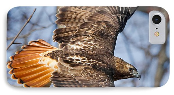Redtail Hawk Square IPhone Case by Bill Wakeley