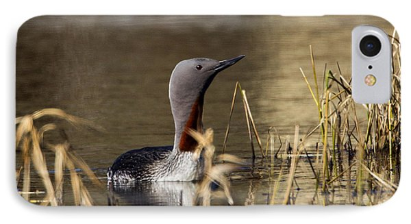 Redthroated Loon IPhone Case by Doug Lloyd