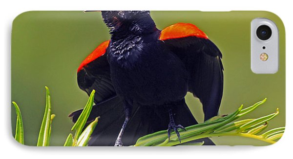 Redwing Black Bird At Full Song IPhone Case by Larry Nieland