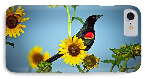 Redwing In Sunflowers IPhone Case by Robert Frederick