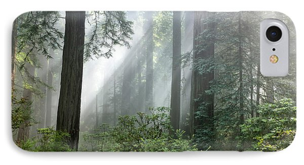 Redwood Forest With Sunbeams Phone Case by Inga Spence