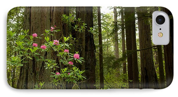 Redwood Trees And Rhododendron Flowers IPhone Case by Panoramic Images