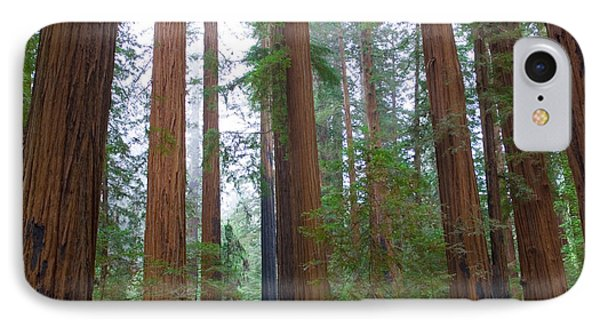 Redwood Trees IPhone Case