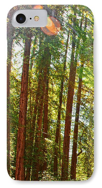 Redwood Wall Mural Panel 1 Phone Case by Artist and Photographer Laura Wrede