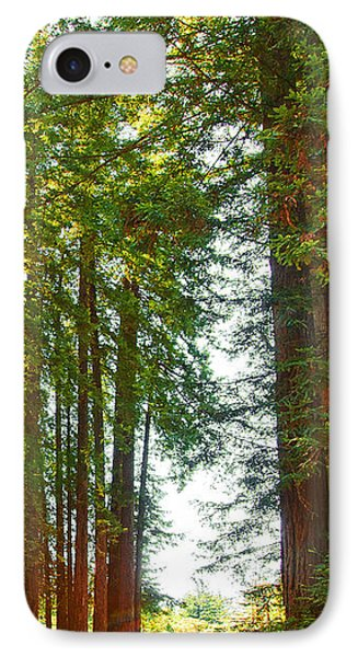 Redwood Wall Mural Panel 2 Phone Case by Artist and Photographer Laura Wrede