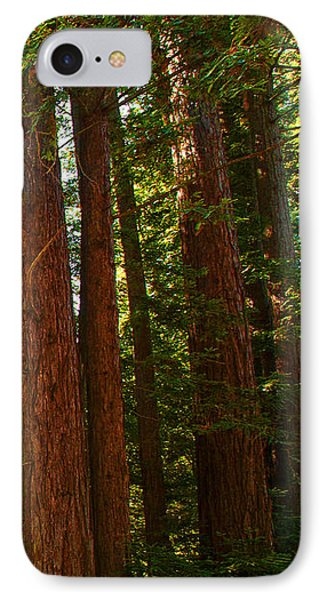 Redwood Wall Mural Panel Three Phone Case by Artist and Photographer Laura Wrede