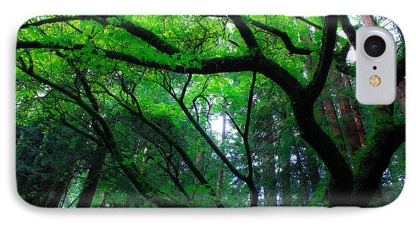 Redwoods IPhone Case