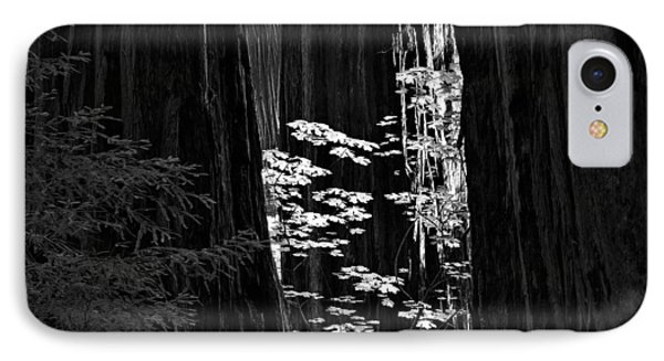 Redwoods Light And Texture IPhone Case by Leland D Howard