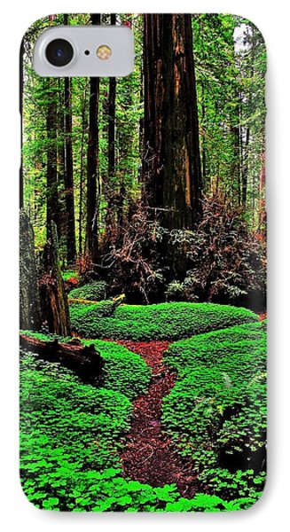 Redwoods Wonderland IPhone Case by Benjamin Yeager