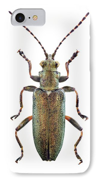 Reed Beetle IPhone Case
