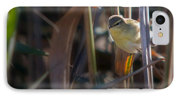 Reed Warbler IPhone Case by Jivko Nakev