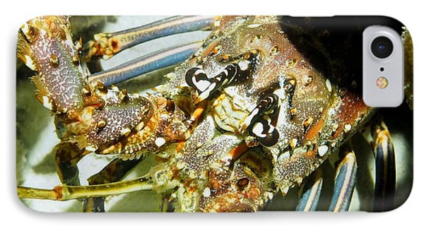 IPhone Case featuring the photograph Reef Lobster Close Up Spotlight by Amy McDaniel