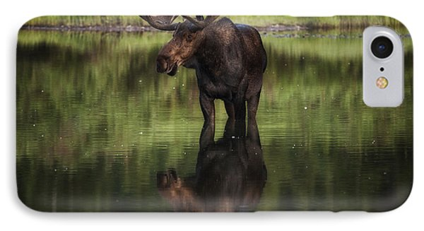Reflecting Bull IPhone Case by Mark Kiver