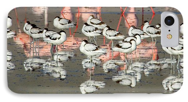 Reflection Of Avocets And Flamingos IPhone Case