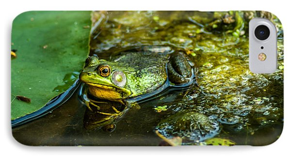 Reflections Of A Bullfrog IPhone Case