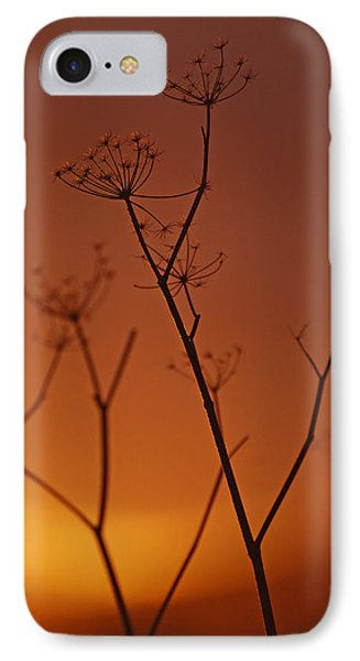 IPhone Case featuring the photograph Regal Old Queen by Jani Freimann
