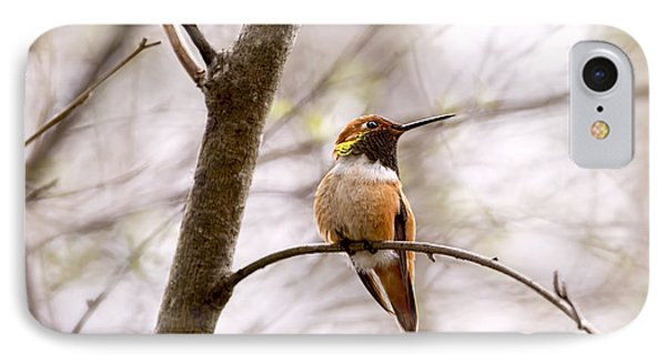 Regal Rufous Hummingbird Sitting IPhone Case by Peggy Collins