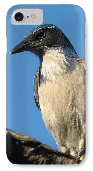 Regal Western Scrub Jay IPhone Case