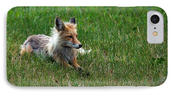 Relaxing Red Fox IPhone Case by Robert Bales