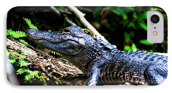 Resting Alligator  IPhone Case
