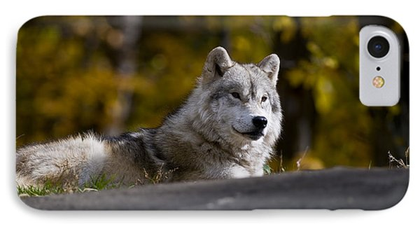 IPhone Case featuring the photograph Resting Arctic Wolf On Rocks by Wolves Only