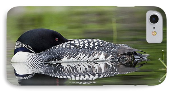 Resting Loon IPhone Case