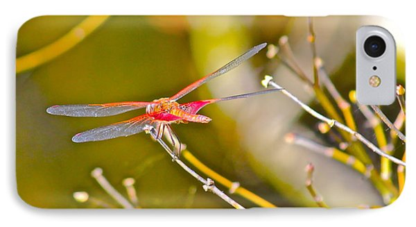 IPhone Case featuring the photograph Resting Red Dragonfly by Cyril Maza