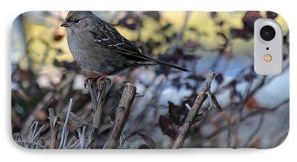 IPhone Case featuring the photograph Resting Sparrow by Marjorie Imbeau