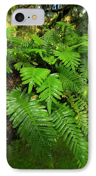 Resurrection Fern, Pleopeltis IPhone Case by Maresa Pryor