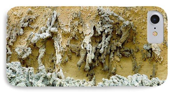 Rhizoliths In A Sandstone Cliff IPhone Case
