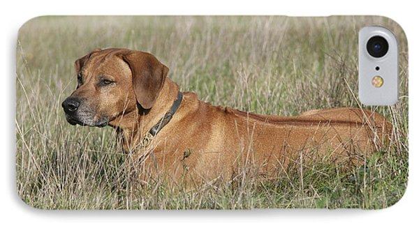 Rhodesian Ridgeback Dog IPhone Case by John Daniels