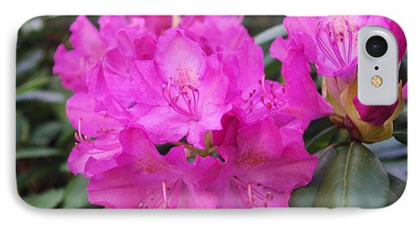 Rhododendron IPhone Case by David Rizzo