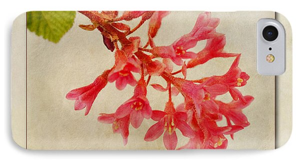Ribes Sanguineum  Flowering Currant IPhone Case by John Edwards