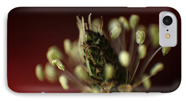 IPhone Case featuring the photograph Ribwort Plantain  by Eden Baed