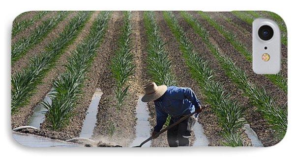 Rice Field In California IPhone Case by Robin Regan