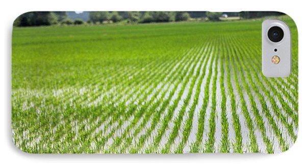 Rice Field Waxhaw Ms IPhone Case