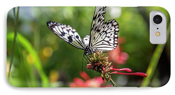 Rice Paper Butterfly (idea Leuconoe IPhone Case by Chuck Haney