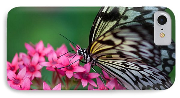 Rice Paper Butterfly IPhone Case by Joann Vitali