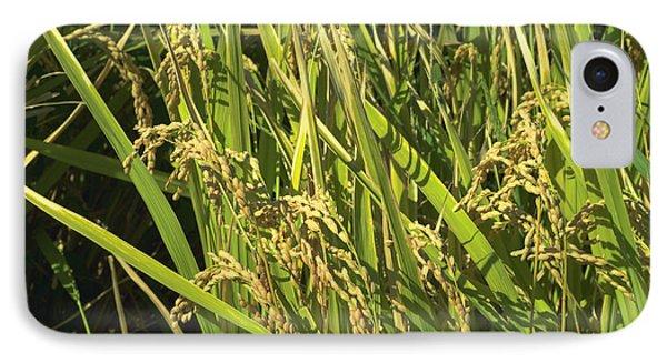Rice IPhone Case by Rachel Mirror
