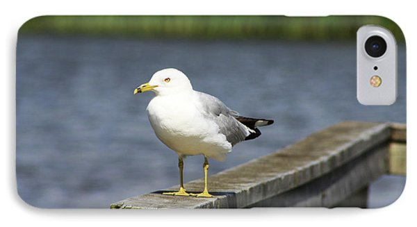 Ring-billed Gull IPhone Case by Alyce Taylor