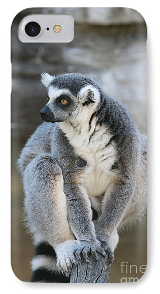 IPhone Case featuring the photograph Ring-tailed Lemur #3 by Judy Whitton